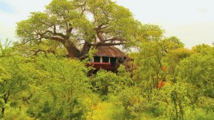 Tarangire Treetops - Tarangire National Park
