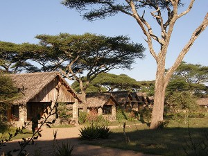 Ndutu Safari Lodge - Serengeti National Park