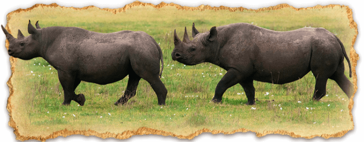 The Big 5 Safari in Tanzania