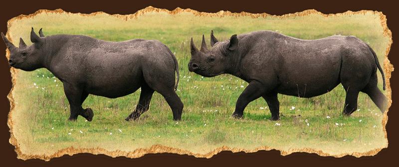 The Big 5 Safari in Tanzania with Augustine's Adventure Africa (AA Africa)