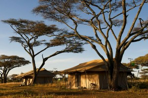 Mara Under Canvas Tented Camp - Northern Serengeti