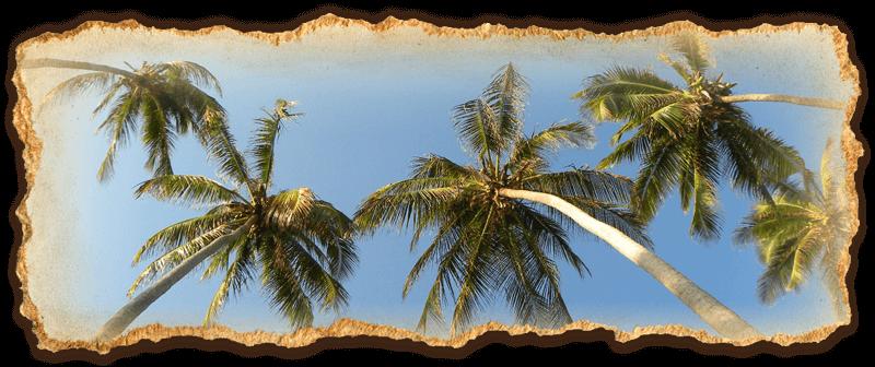 Zanzibar Palm Trees