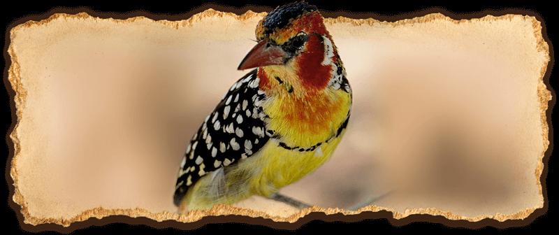Slider - Special Interest Birding 02 (S.Magee)