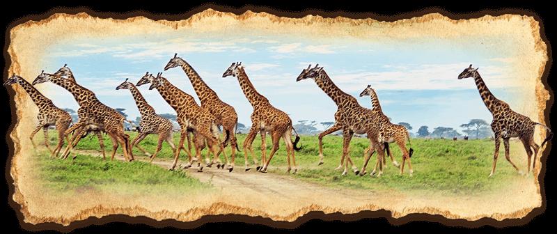 Ultra Luxury Safari