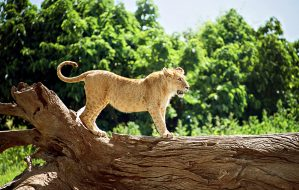 tanzania-safari-day-trip