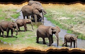 arusha-safari in tanzania