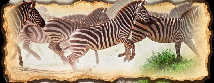 Why Safari in Tanzania?
