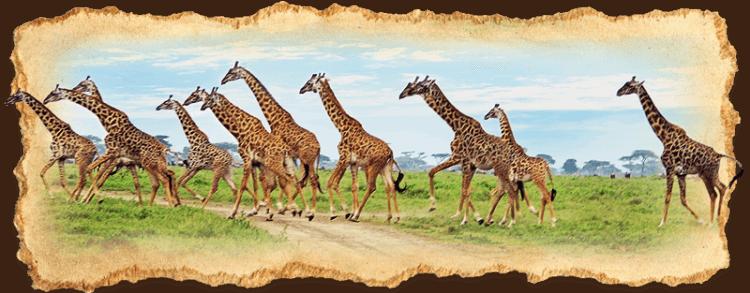 Safari Tanzania | Why Tanzania