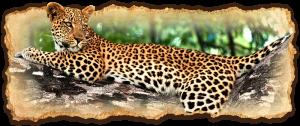 tanzania-safari-deluxe-escapes