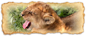 tanzania-safari-deluxe-escapes1