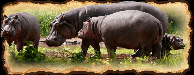 Tanzania Safari Deluxe Escapes