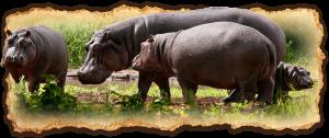 tanzania-safari-deluxe-escapes2