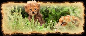 tanzania-safari-deluxe-escapes4