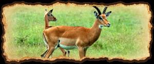 tanzania-safari-deluxe-escapes5