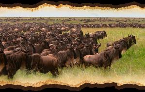 The Migration a safari in Tanzania