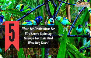 5 Must-See Destinations For Bird Lovers Exploring Through Tanzania Bird Watching Tours!