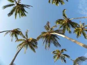 z-tall-palms-svg